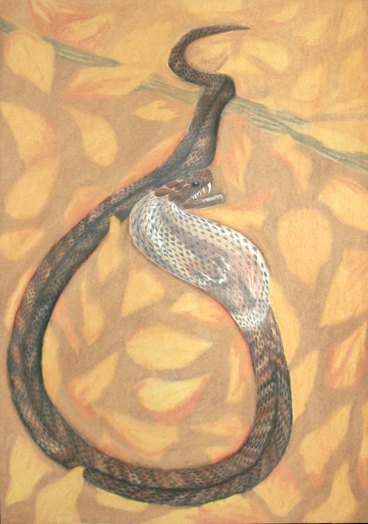 Snake - 2004Oil Pastels and Colored Pencil