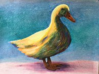 Just a Duck soft chalk pastel on 8.5 x 11 printer paper, June 2016