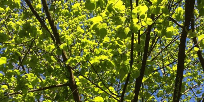 Der Baum - das Leben