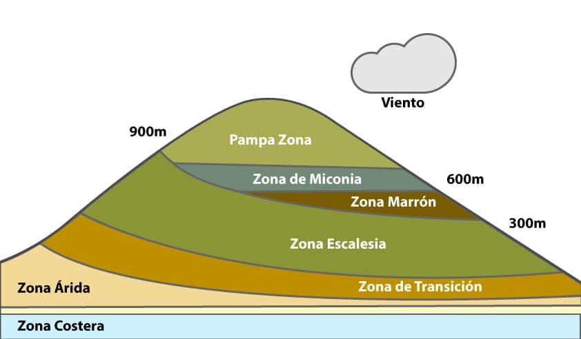 Zonas de vegetación perteneciente a la flora de las islas Galápagos