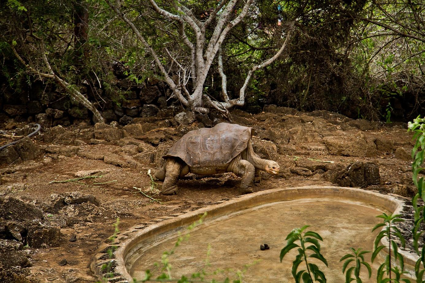 Centro de Crianza Galapagos Santa Cruz