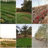 مزرعة هدى الشام