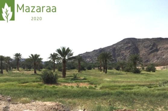 مزرعة استثمارية 203 الف متر
