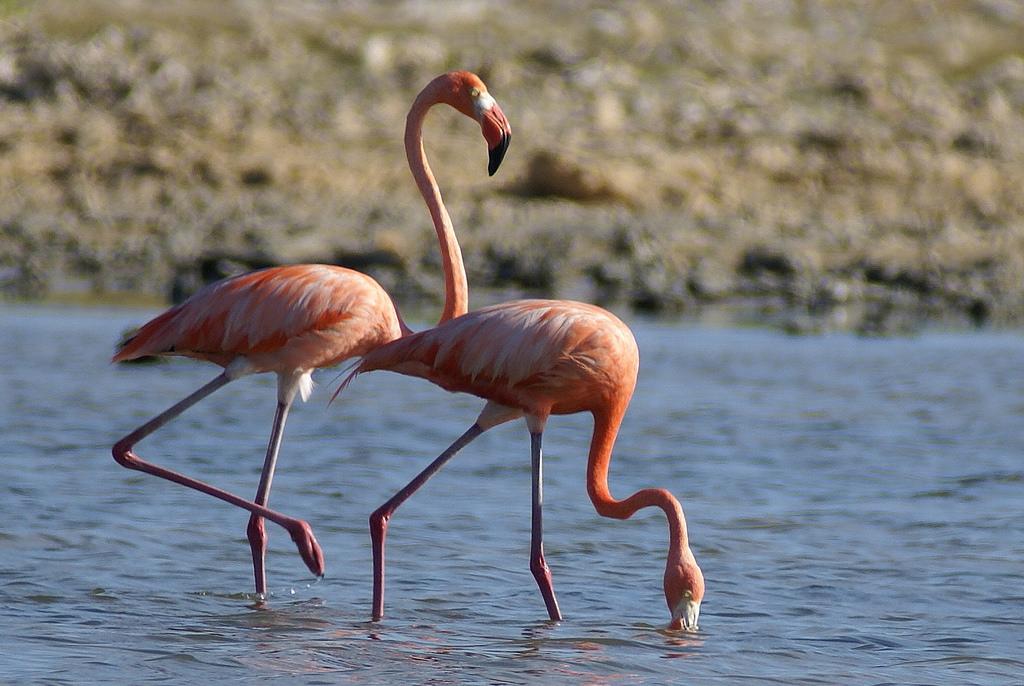 Flamingos mazatlan