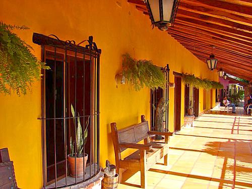 El quelite Mazatlán