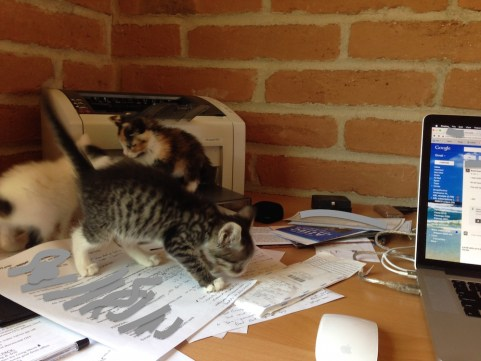 Kittens on desk