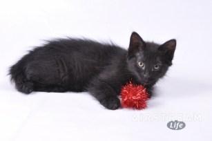HSSA foster kittens-1