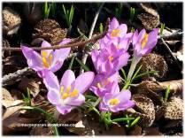 spring2_02