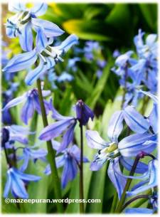spring3_05