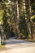 skog03