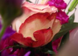 051412_1127_Flowers2.jpg