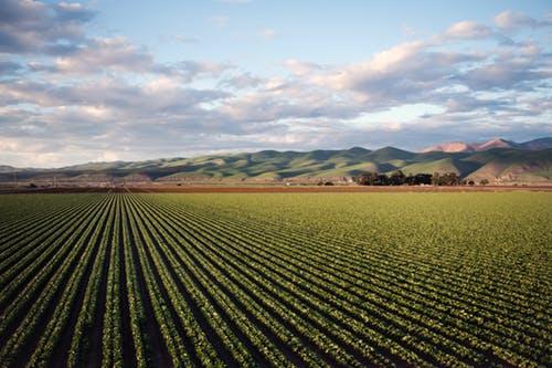 Објавен повик за ангажирање на експерт за подготовка на видео материјал за промоција на земјоделски задруги