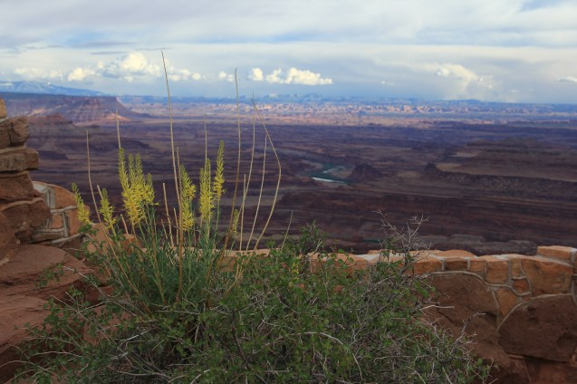 Dead Horse Point Overlook (Dead Horse Point State Park)