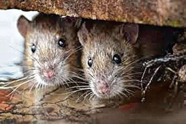 Hantavirus Kills Man in China