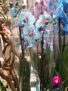 MB Eventi in fiore a Roma - cosa altro puoi trovare da MB Eventi in fiore 12