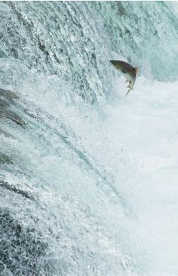 viewpoint-Salmon-Run