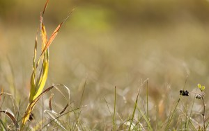 Nature photo by Tony Schellenberg