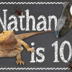 a reptile party poster with bearded dragon