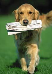 dog-newspaper-21