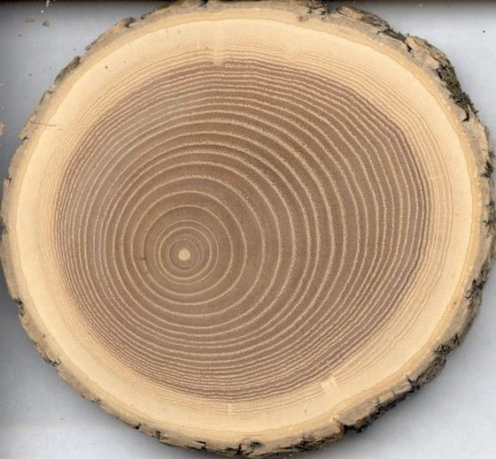 Oak has strong and beautiful wood
