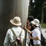 晴美ちゃんと植物散策in新宿御苑と木の実アクセサリー教室開催決定