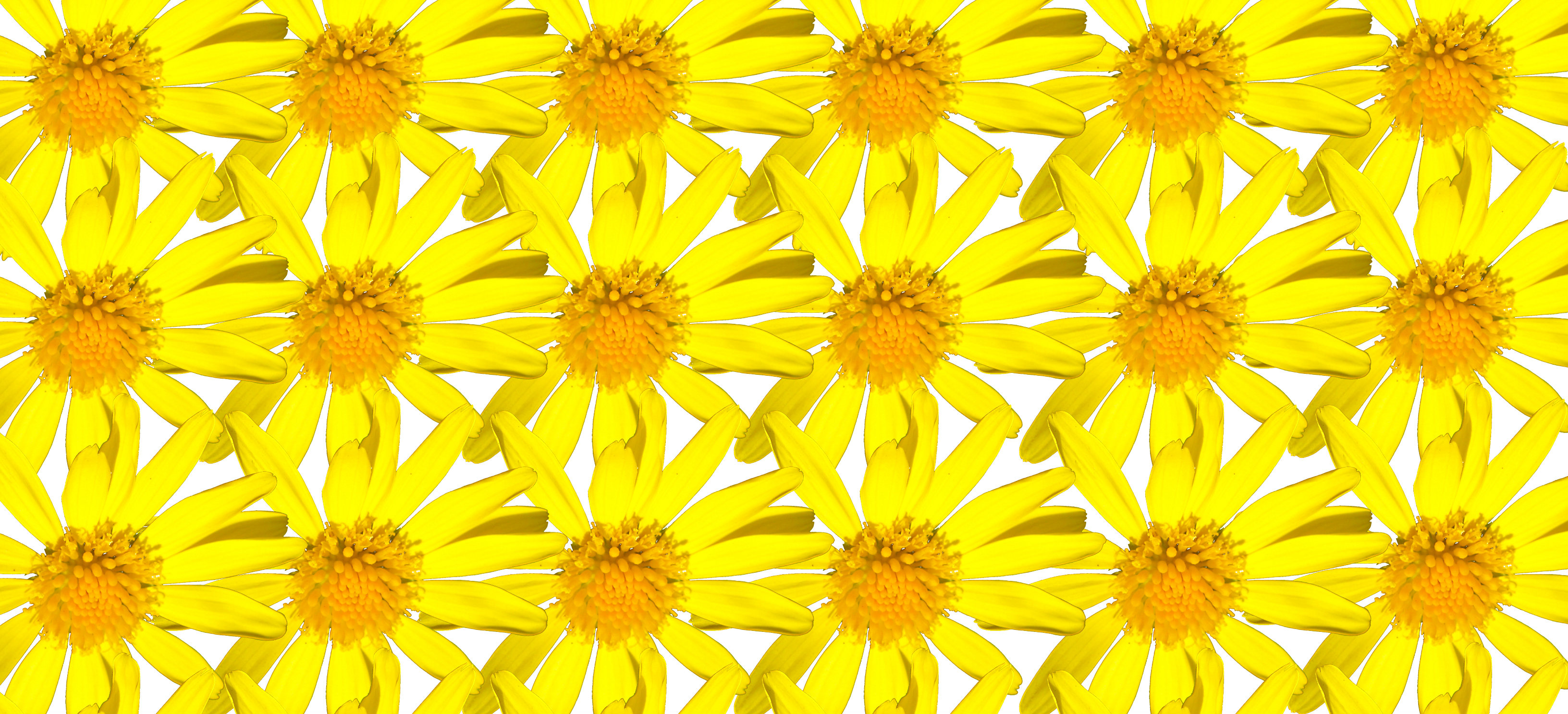 repeating daisies