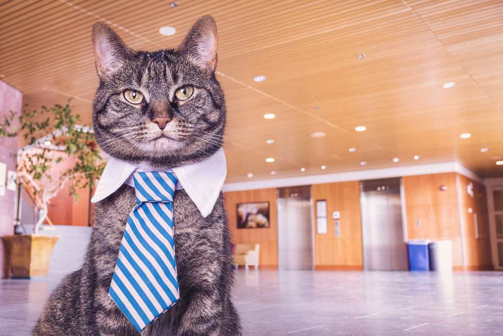 Cat in a tie