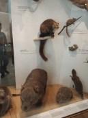 Evolution Exhibit