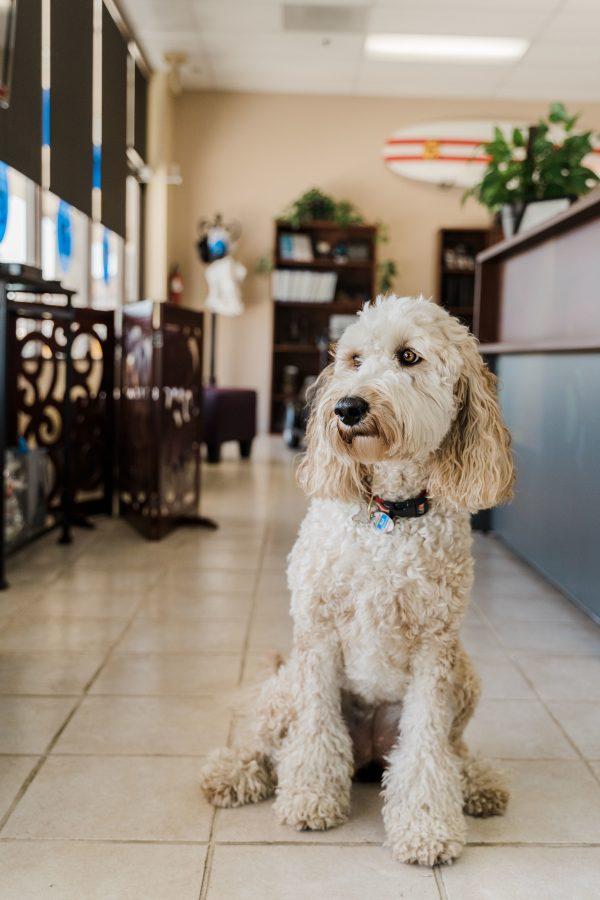 Ella, the office dog