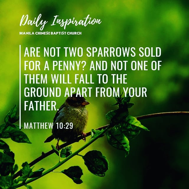 Are not two sparrows sold for a penny? And not one of them will fall to the grou…