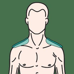 両肩(肩峰から5cmまで)