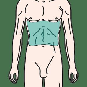 腹部(乳輪最下~へそまで)