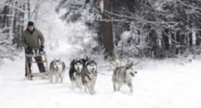 McCall Ultra Sled Dog Challenge OFFICIAL START McCall Chamber Of Commerce Amp Visitors Bureau