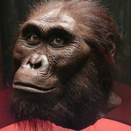Australopithecus afarensis (ca. 3–3.5 million years ago)