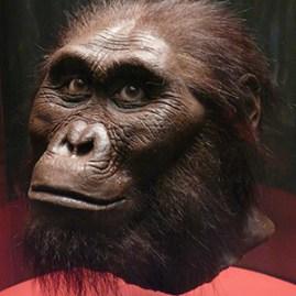 Australopithecus afarensis (ca. 3–3.5 million years ago)