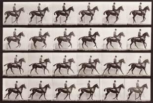 Daisy Cantering Straddled, Animal Locomotion Portfolio, Plate No. 616, 1887, Eadweard Muybridge (English, 1830-1904), Collotype, Bank of America, 93.239.4.