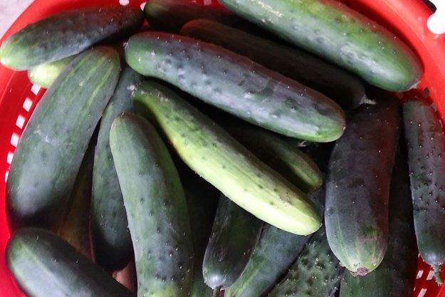 McCollum CSA Cucumbers