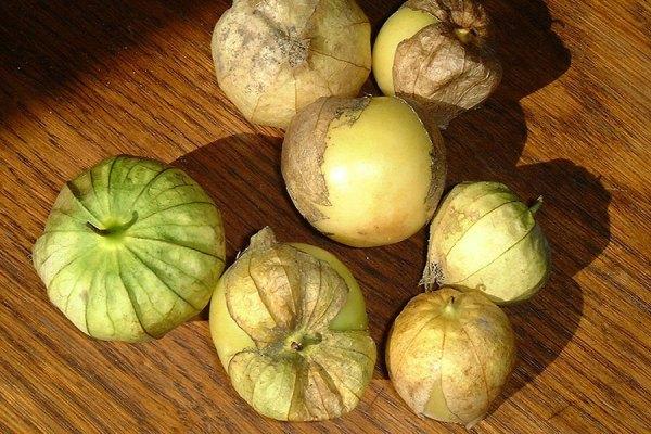 McCollum CSA tomatillo