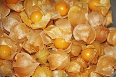 McCollum CSA Ground Cherries
