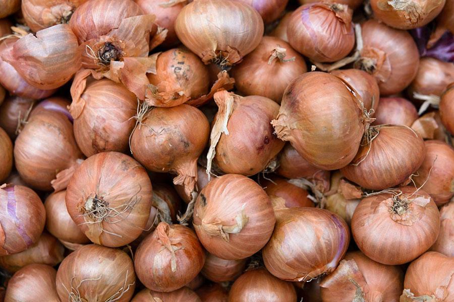 McCollum CSA Onions