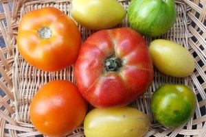 McCollum CSA Tomatoes