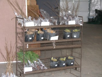 Grasses, bareroot conifers and crabapples