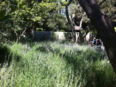 Pasadena Garden Tour