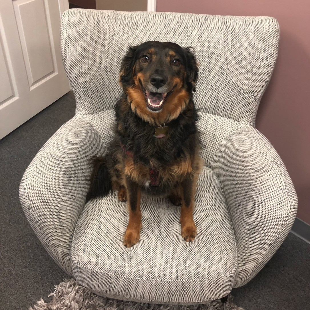 cute dog, therapy dog, therapy in rockville