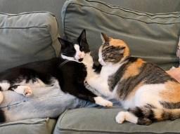 Anna Rowley's Cats