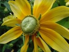Mc Flower Calendar shots June 19, 2024 15