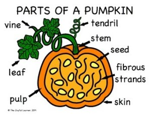 Storytime Anytime: Pumpkins : Sturdy for Common Things