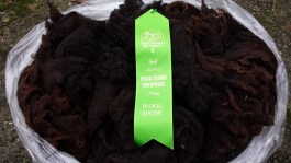 I entered some fleeces in a local fiber show and N-Kerry's fleece got 3rd place in a very large class of Shetlands.