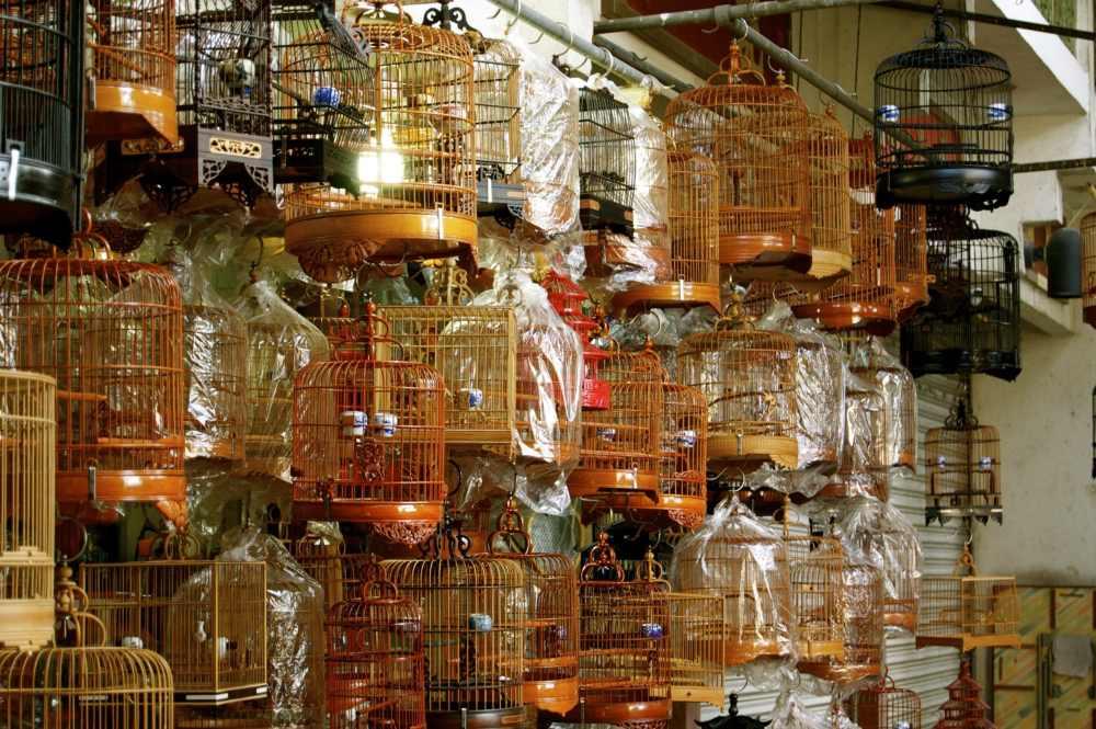 Marché aux oiseaux à Hong Kong et ses jolies cages