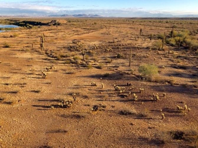 Désert de Sonora Arizona